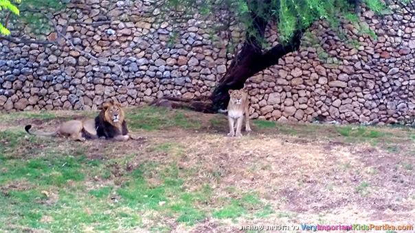 אני ירושלים - מלך החיות בגן החיות התנ