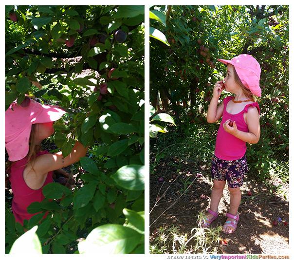 פירות הקיץ - שזיף סורי