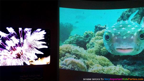 סודות הים - החיים בשונית