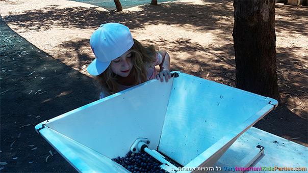 בוצרים ונהנים מועכים ענבים