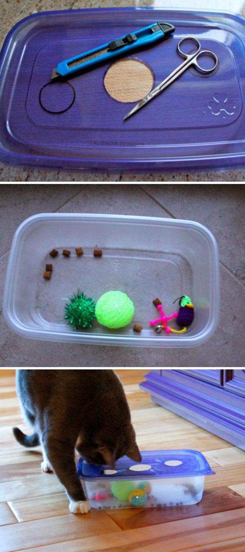 יום החתול - משחק קופסא