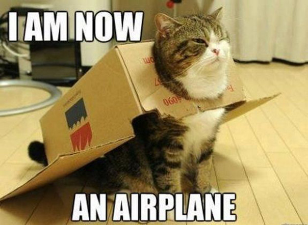 יום החתול - מם חתול אוירון