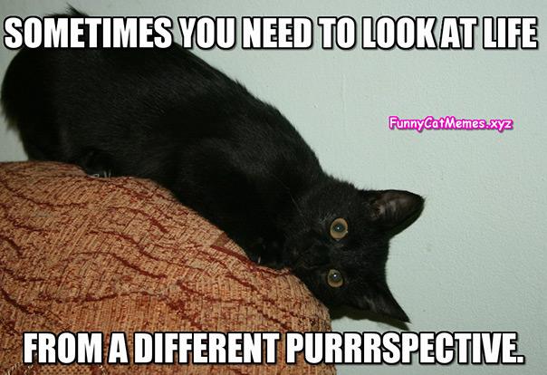 יום החתול - פרספקטיבה