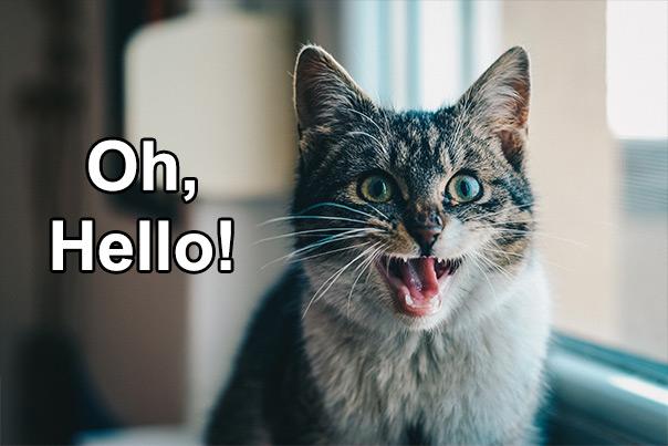יום החתול - שלום שלום