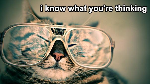 יום החתול - אני יודע מה אתה חושב