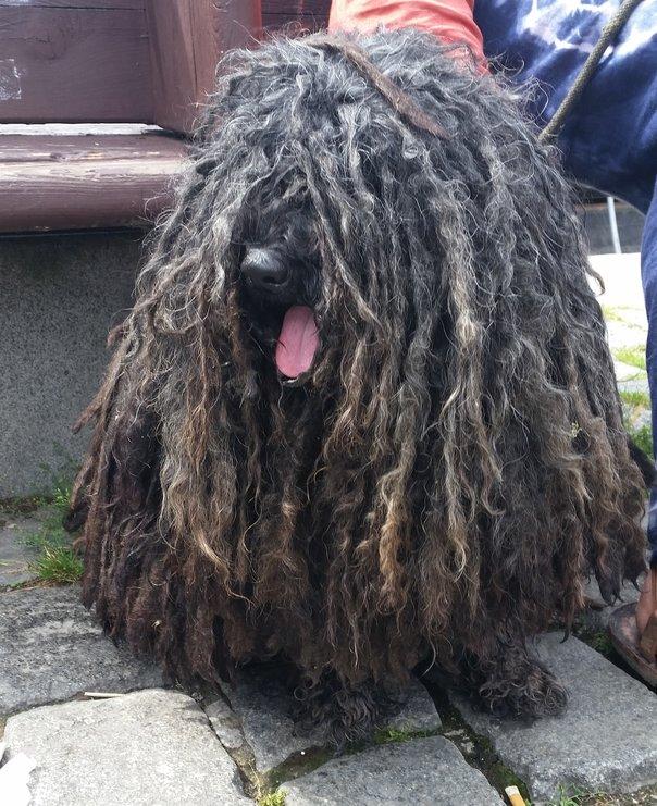 יום הכלב - הכלבים של פראג