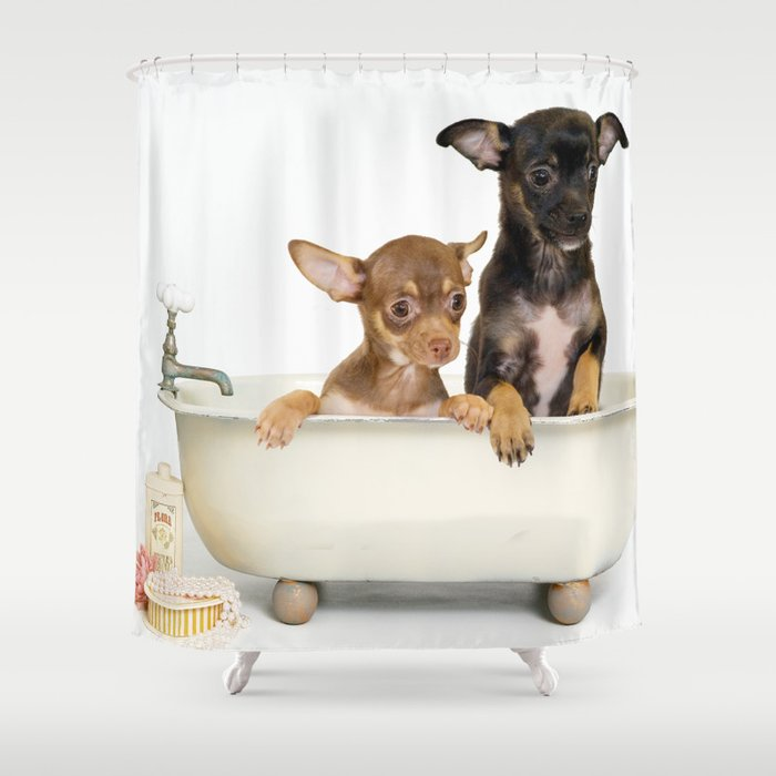 וילון רחצה גורי צ'יוואווה באמבטיה